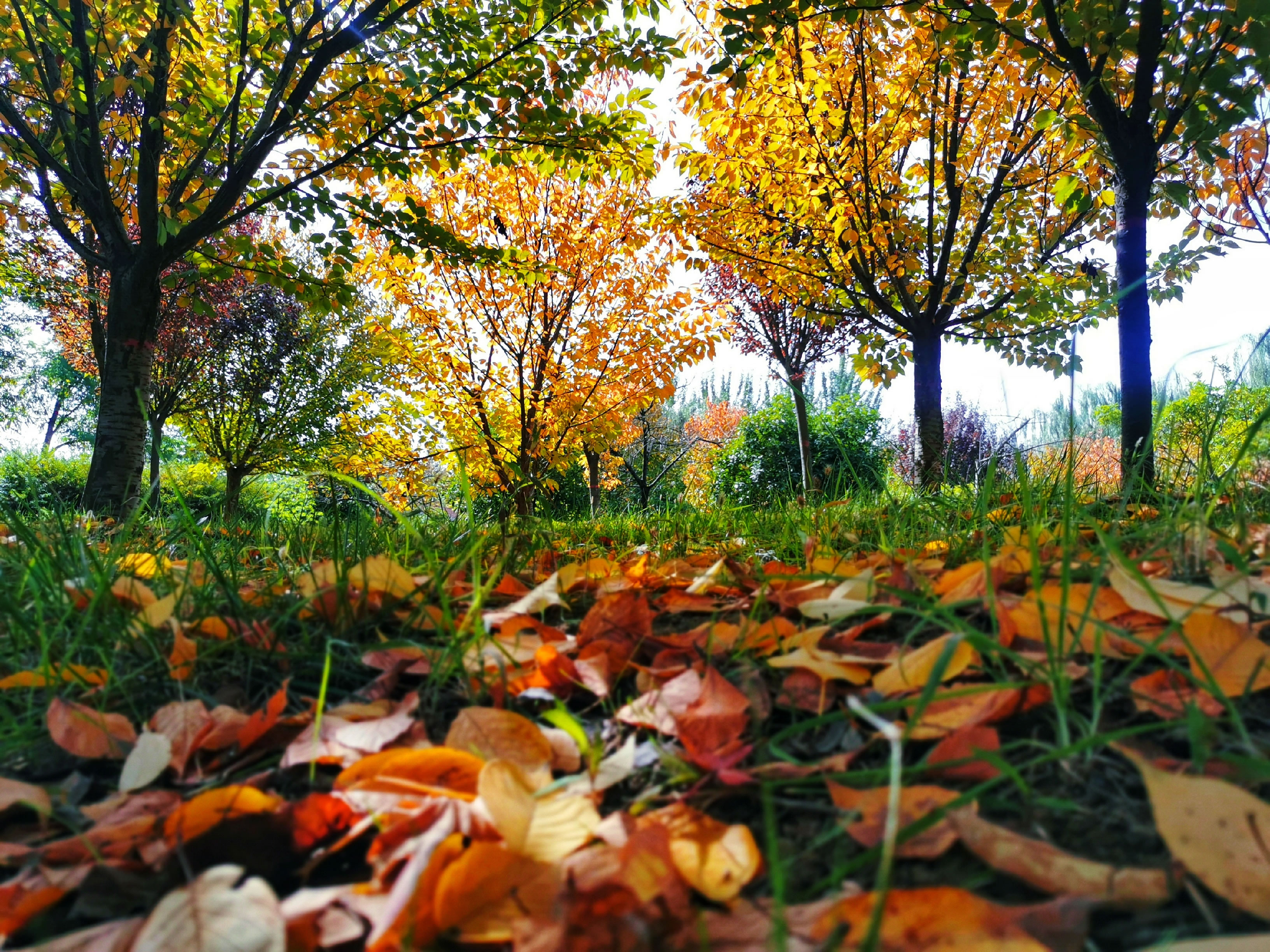【粉丝生活】深秋之际 灞河两岸芦花白