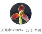 天泉水123321W.png